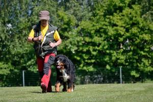 vorsicht schlechte hundetrainer