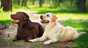 erwachsene  Hunde erziehen
