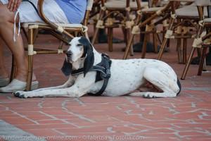 hund restaurant