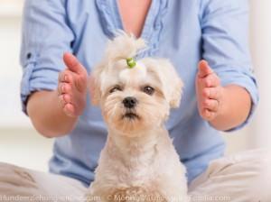 Hunde Guru Falle
