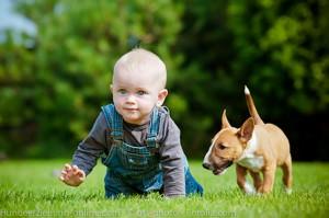 hunde und babies