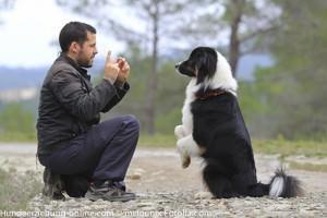 Hundetraining mit Spass