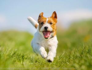 hyperaktivität bei hunden