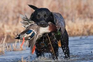 Jagdverhalten Hunde
