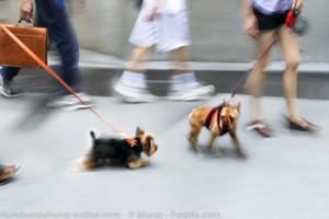 Respektlos Hundehalter